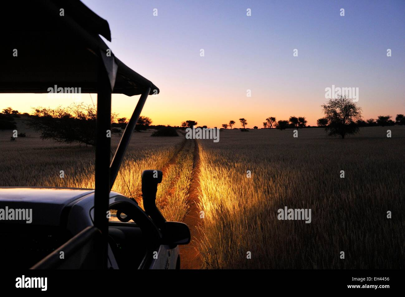 Namibia, Kalahari desert, Intu Afrika Kalahari Game Reserve, night safari - Stock Image