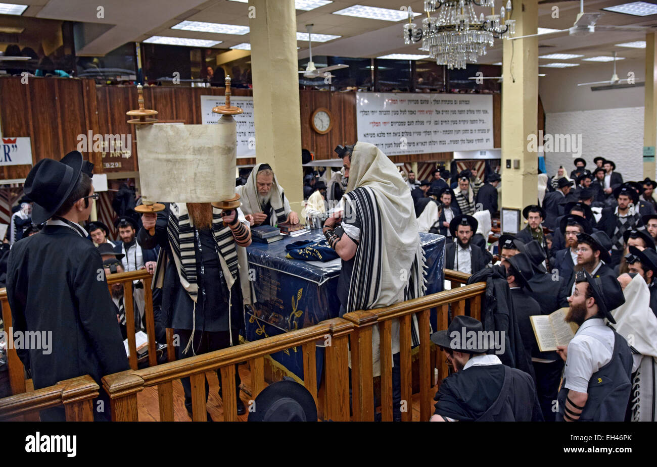 A Torah is lifted and shown to the congregation after a reading in a synagogue in Crown Heights, Brooklyn, New York - Stock Image