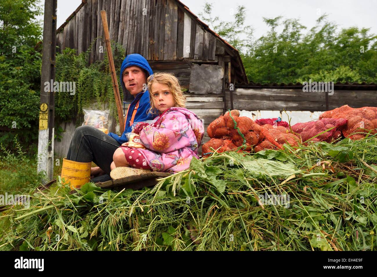 Romania, Transylvania, Biertan, transport of hay in a horse cart - Stock Image