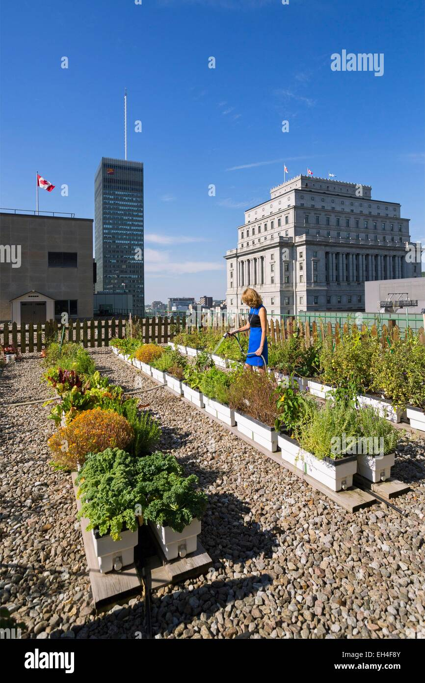 Canada, Quebec province, Montreal, Queen Elizabeth Hotel, the green roof and its vegetable garden - Stock Image
