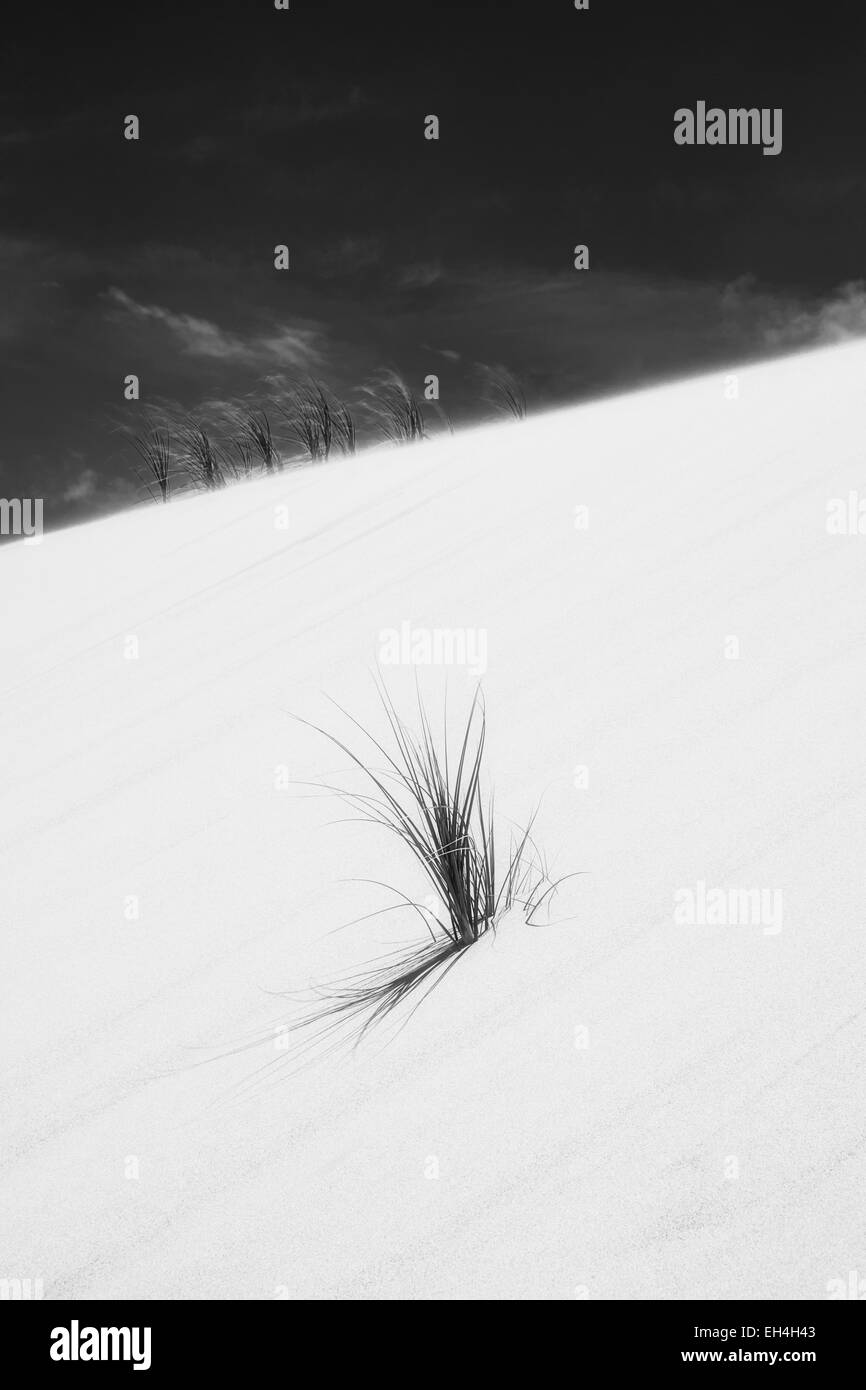 90 mile beach and grass on dunes in Northland, New Zealand. Colour version EH4H0C - Stock Image