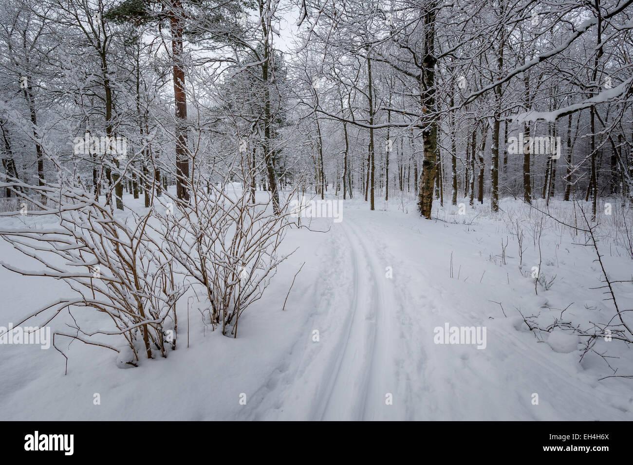 Ski piste - Stock Image