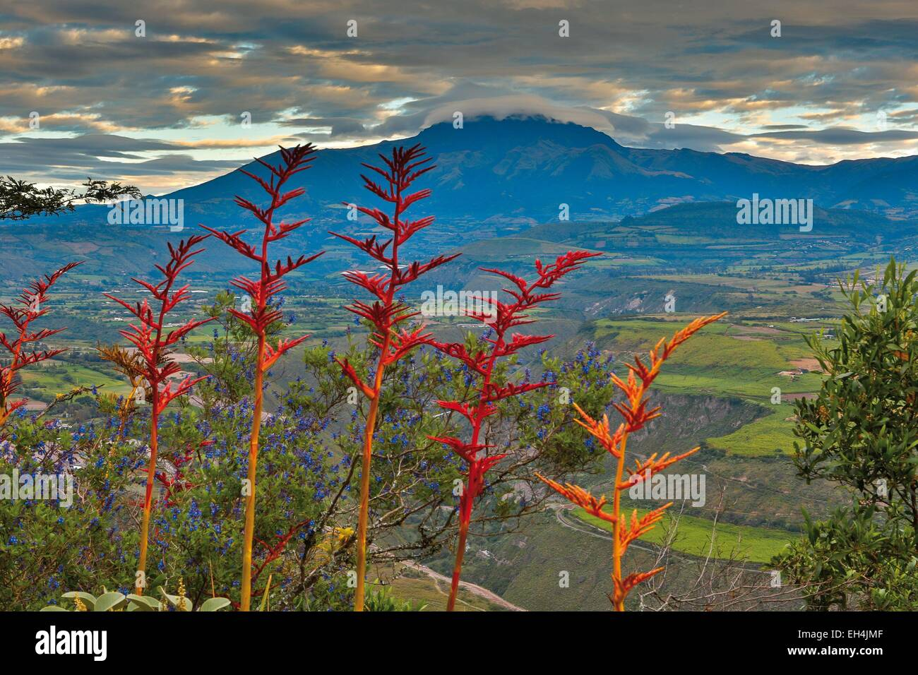 Ecuador, Ibarra, horizontal view of Cuicoxa volcano in the clouds with a leading wild red plants - Stock Image