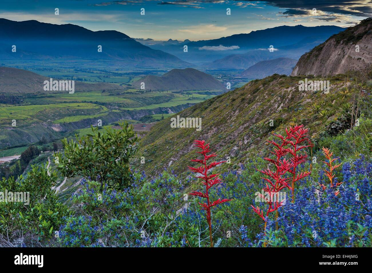 Ecuador, Ibarra, mountain landscape of hills and valley with wild flowers in the foreground under a stormy sky - Stock Image