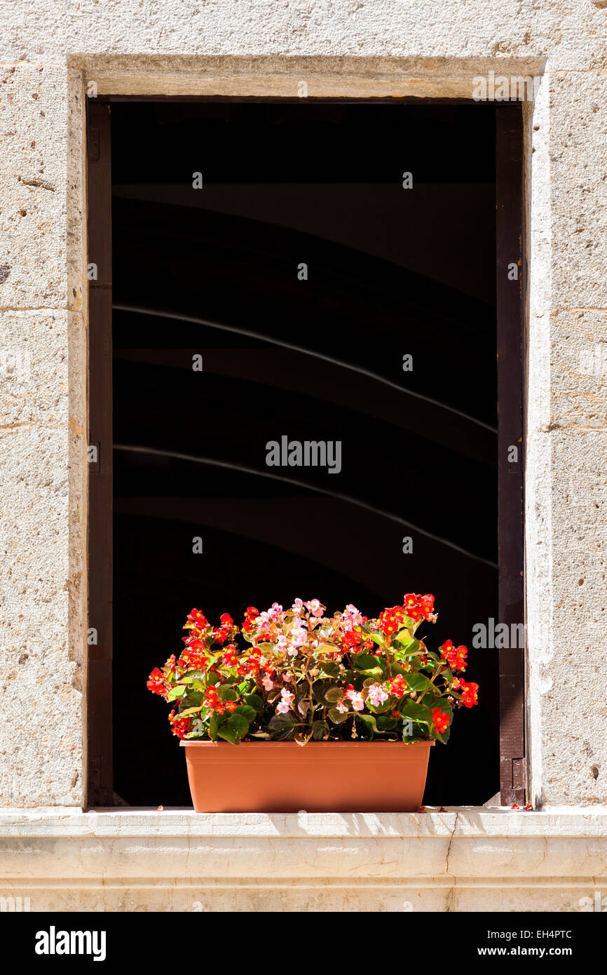 Plant pot with flowers on a dark window - Stock Image