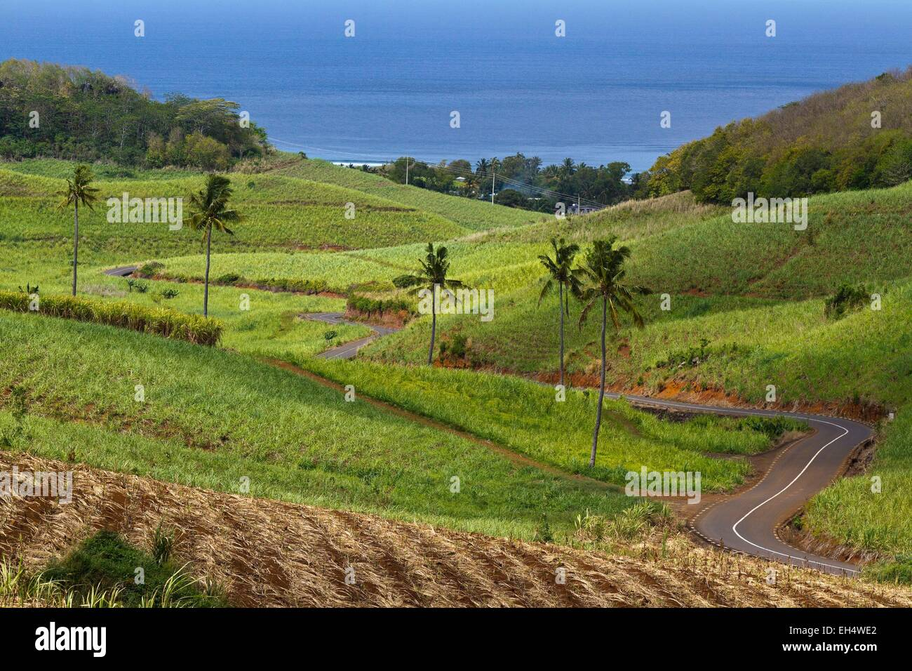 Mauritius, South West Coast, Black River District, sugar cane fields Chamarel - Stock Image