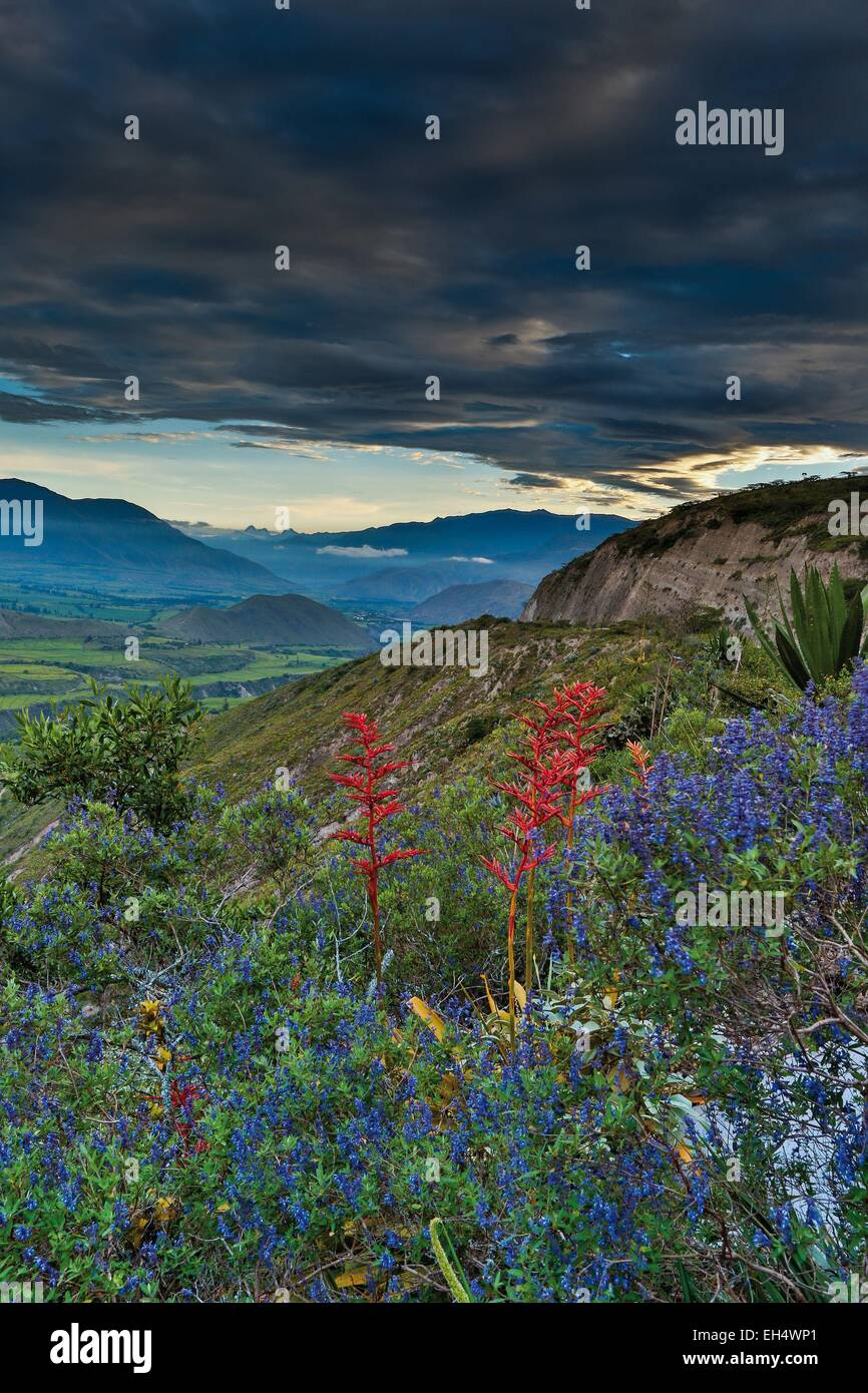 Ecuador, Ibarra, mountain landscape with wildflowers in the foreground under a stormy sky - Stock Image
