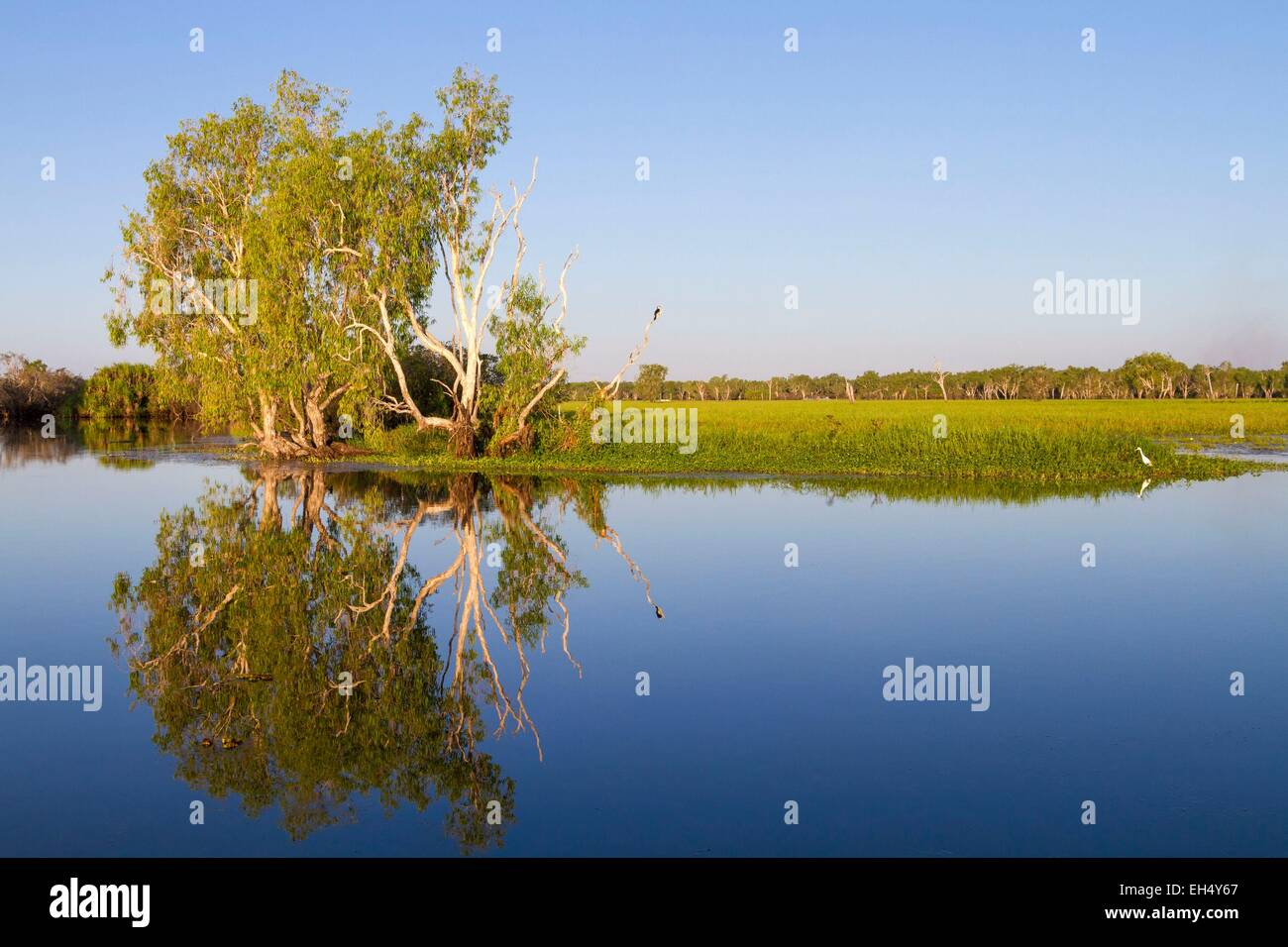 Australia, Northern Territory, Kakadu National Park, listed as World Heritage by UNESCO, Yellow Water Billabong - Stock Image