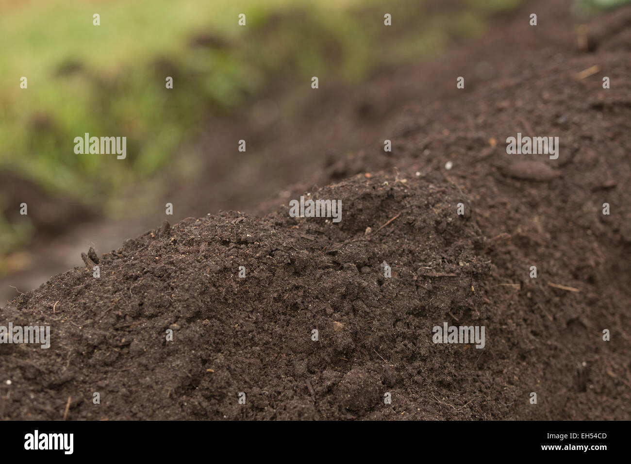 Vegetable mould for in a greenhouse - Stock Image
