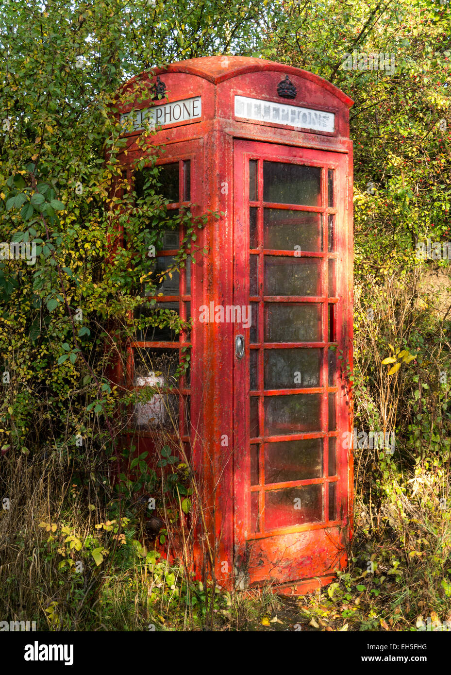 Dilapidated old telephone kiosk partly overgrown by a hedge. - Stock Image
