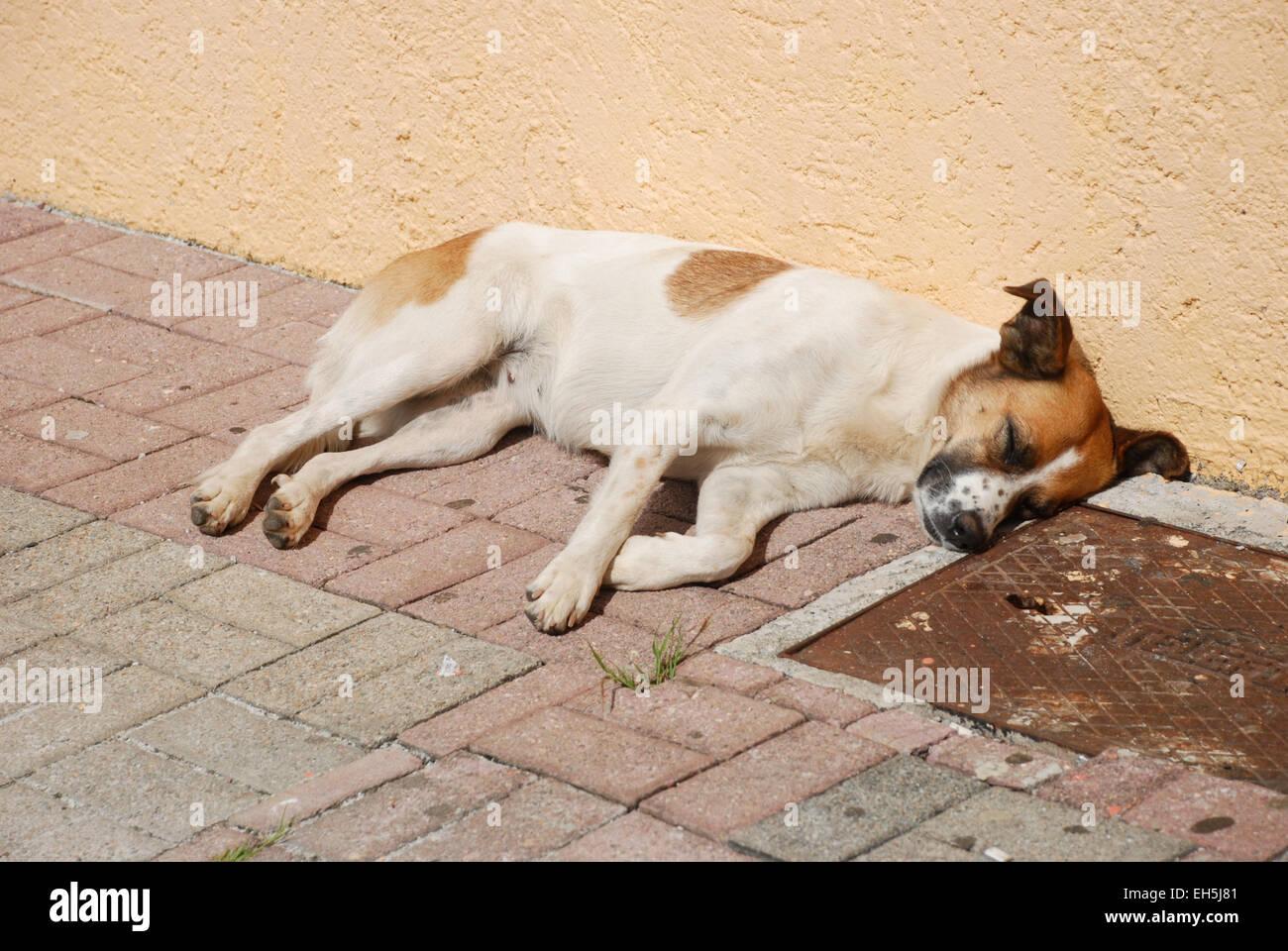 Dog Nap - Stock Image