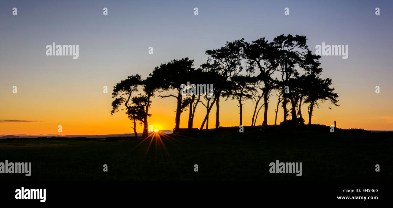 Copse of Trees at Poolton, Ardersier, Inverness, Scotland, United Kingdom - Stock Image