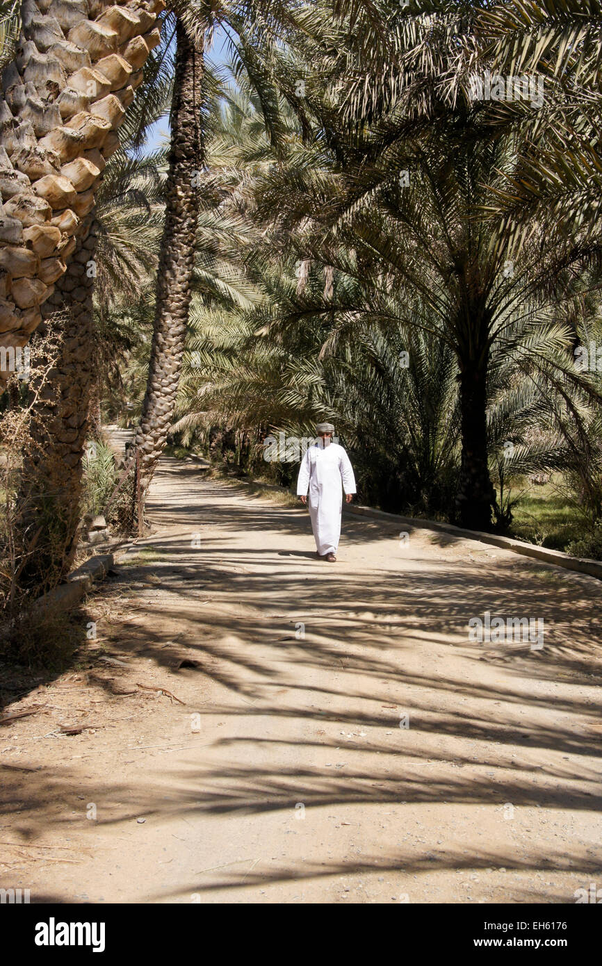 Man walking amid date palms, Al-Hamra, Oman - Stock Image