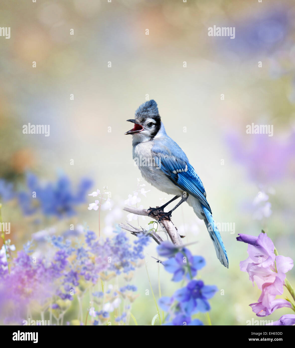 Blue Jay Perched In The Garden Stock Photo