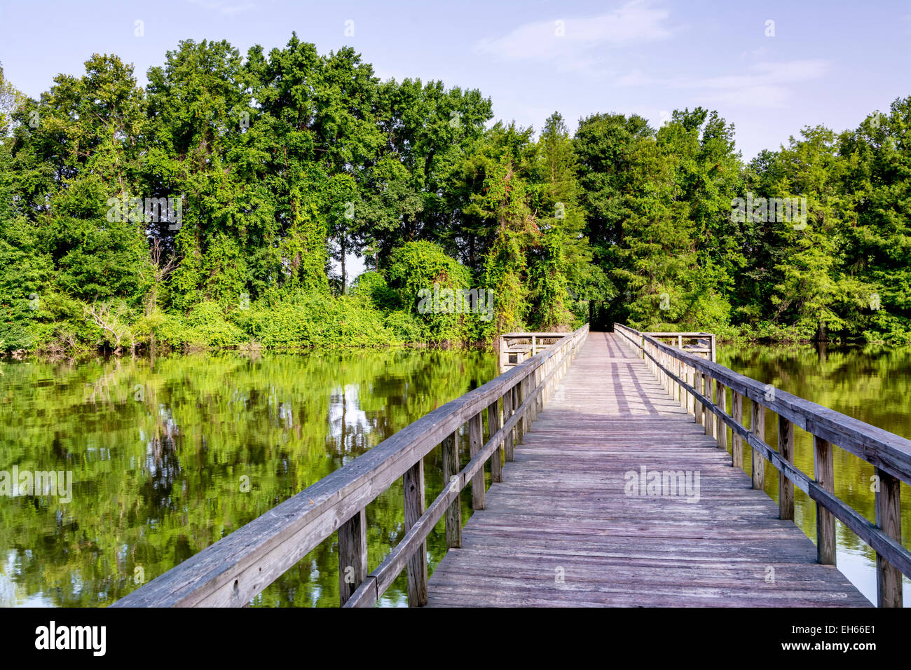 Wood walkway leads over a swamp in Alabama - Stock Image