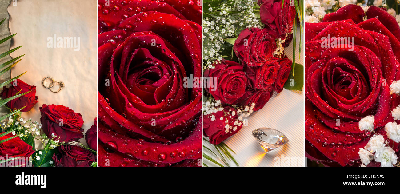 Red roses - Valentines Day - Stock Image