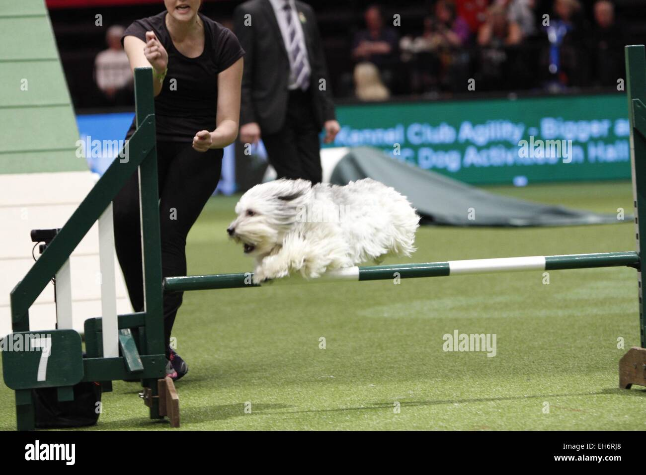 Birmingham, UK. 8th March, 2015. Pudsey, winner of Britains Got Talent taking part in the Agility final at Crufts - Stock Image