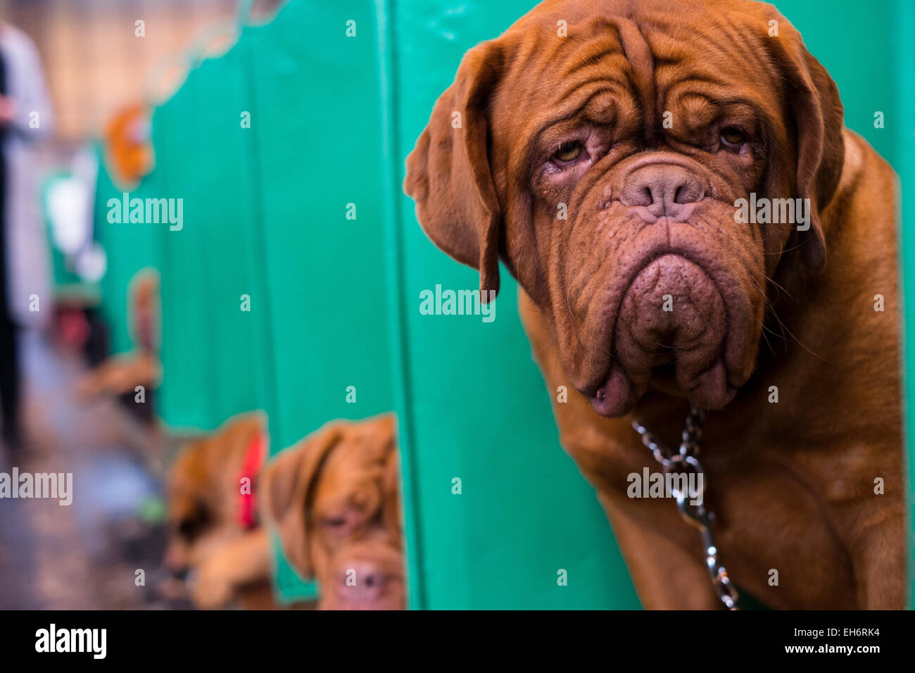 Birmingham, UK. 06th Mar, 2015. First held in 1891, Crufts is said to be the largest show of its kind in the world, - Stock Image