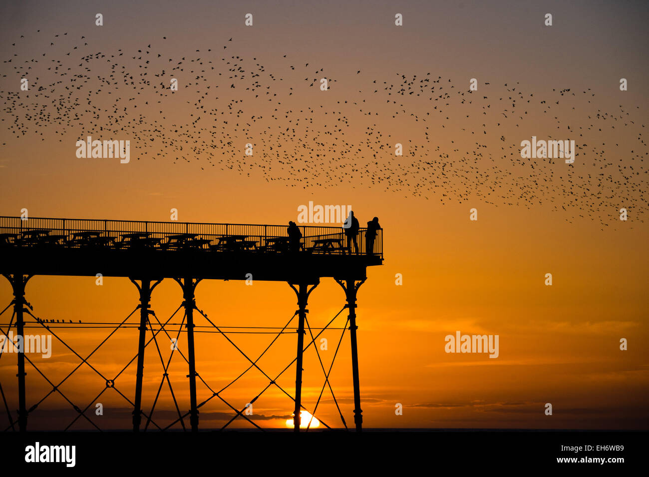 Aberystwyth, Wales, UK. 8th March, 2015. UK Weather:  At the end of an afternoon of clear blue skies and warm spring sunshine, with the sun setting spectacularly over Cardigan Bay,   'murmurations' of thousands of starlings fly in at sunset  to settle for the night on the cast iron legs of the Victorian seaside pier at Aberystwyth on the west wales coast UK.   The nightly roost in Aberystwyth is one of only three urban roosts in the UK and draws a regular crowd of onlookers and photographers every evening. Credit:  keith morris/Alamy Live News Stock Photo