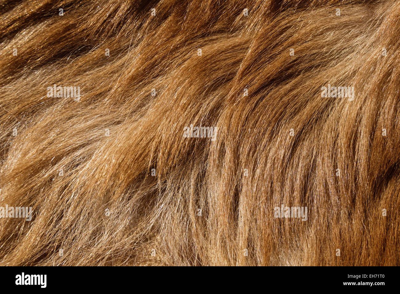brown colored black bear fur background texture image Stock Photo