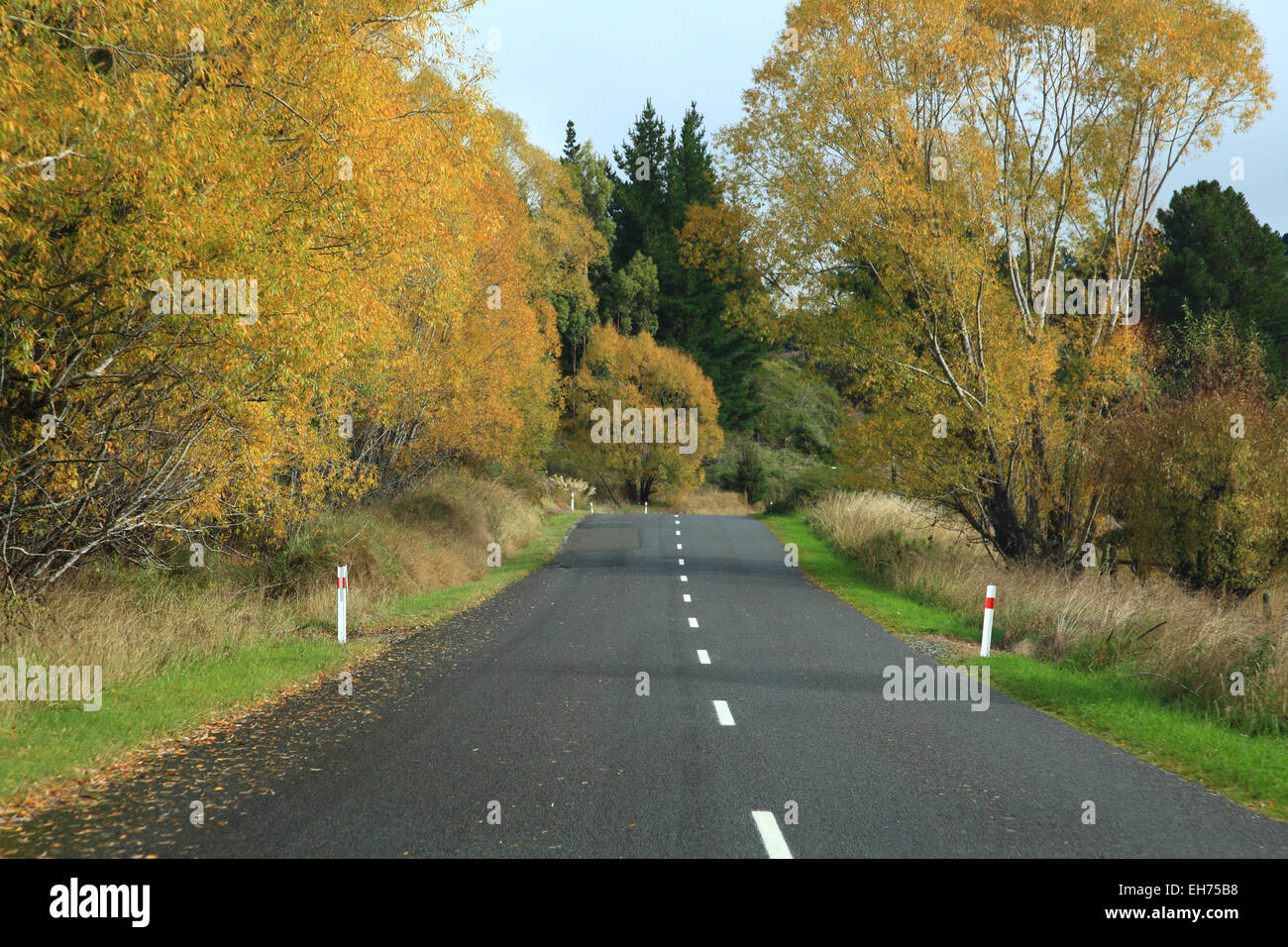Long road stretching out into the distance with autumn tree in New Zealand Stock Photo
