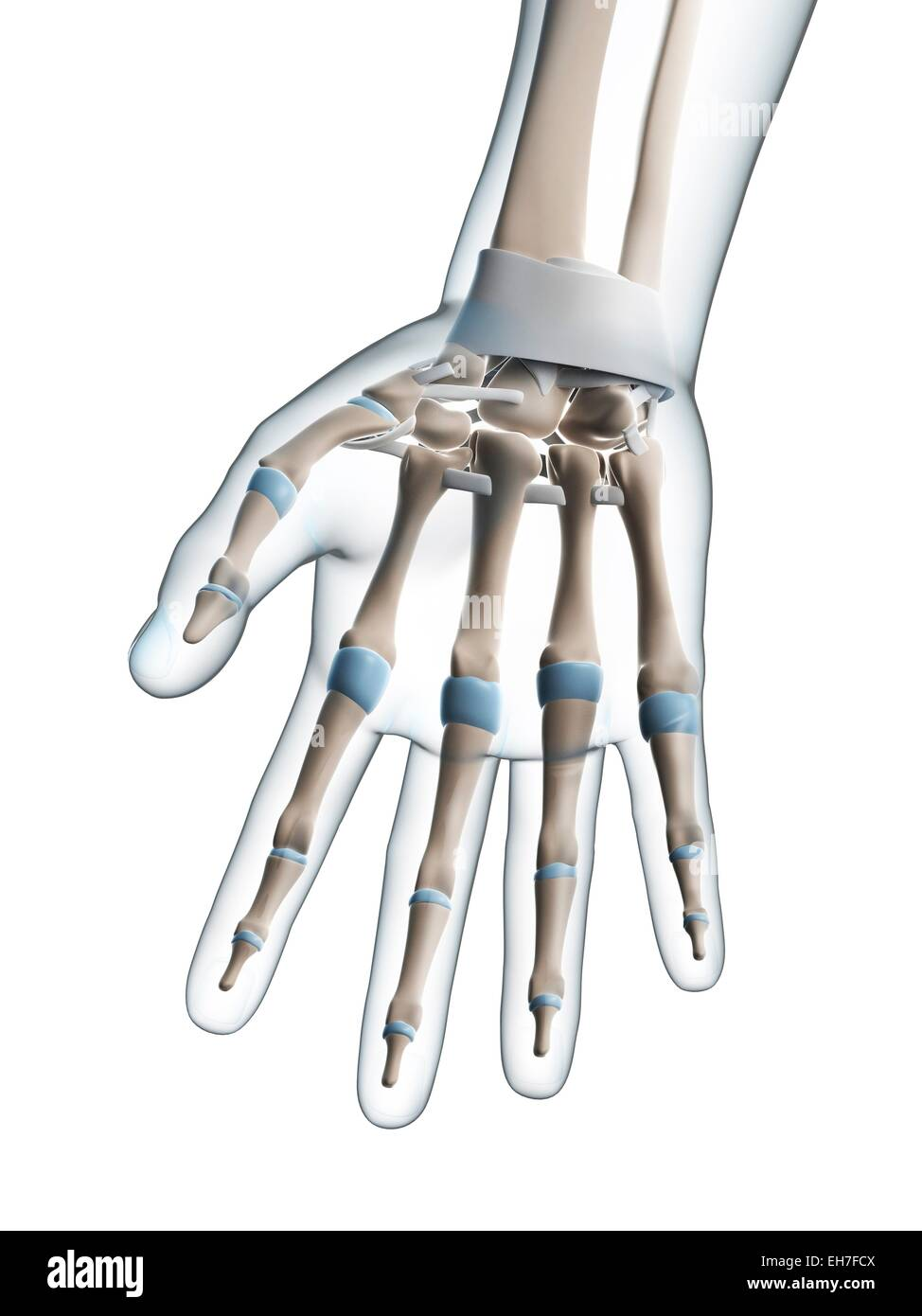 Human hand, artwork - Stock Image