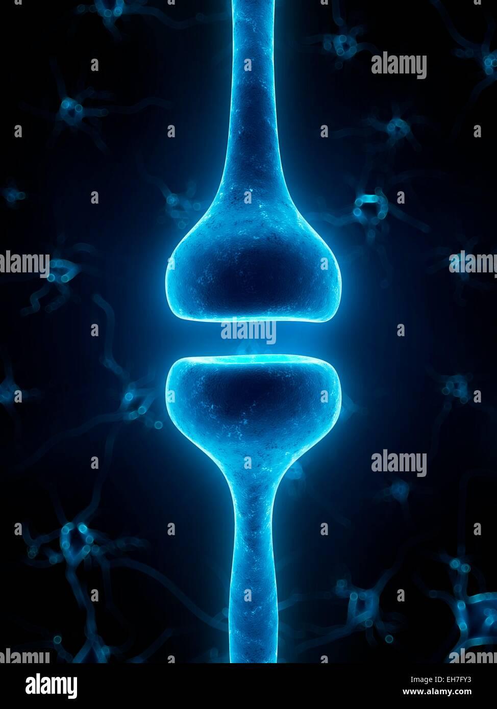 Human synapse, artwork Stock Photo