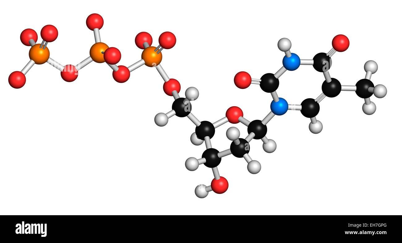 Thymidine triphosphate molecule Stock Photo