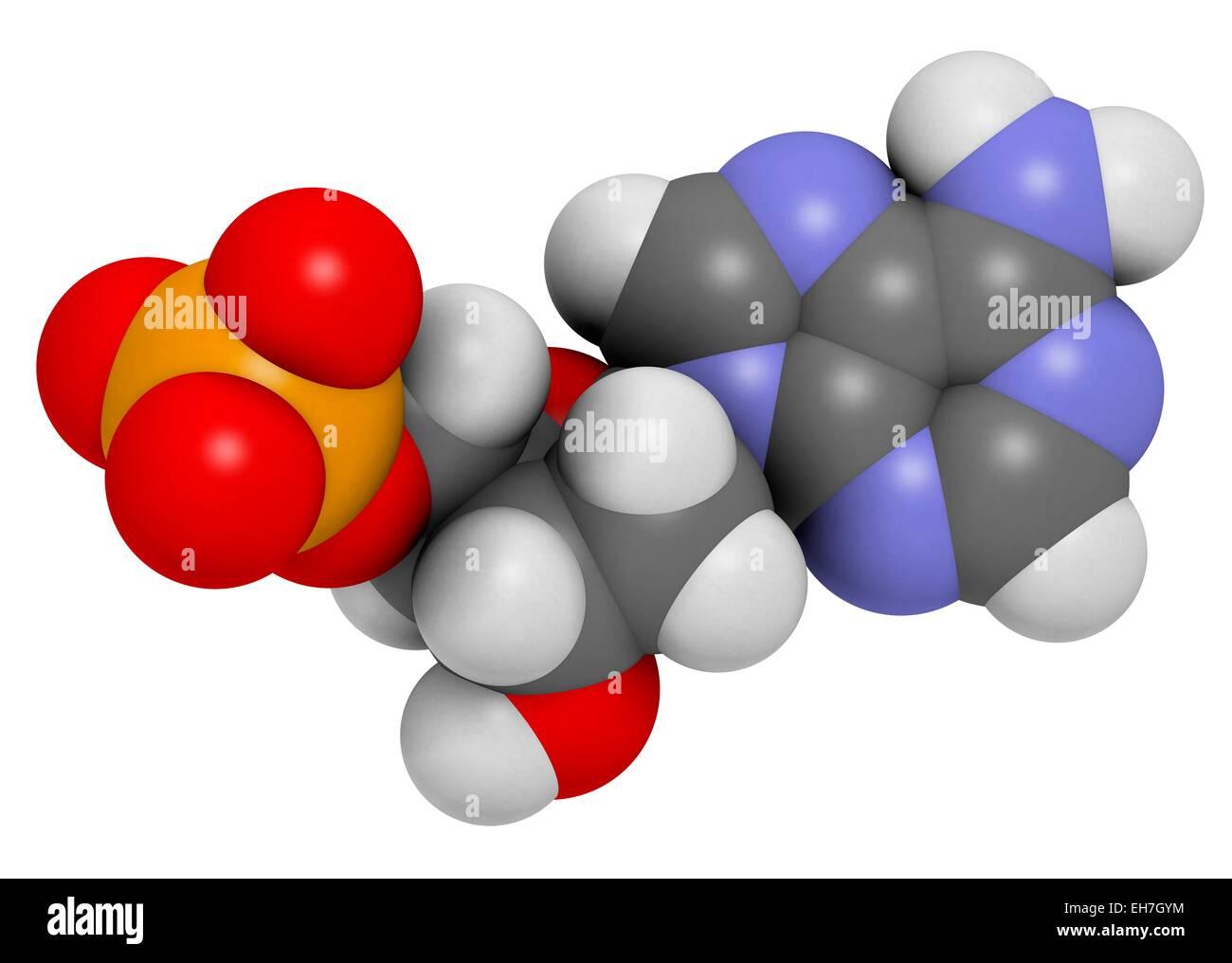 Deoxyadenosine monophosphate molecule - Stock Image