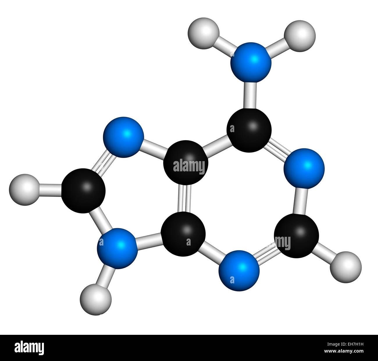 Adenine purine nucleobase molecule - Stock Image