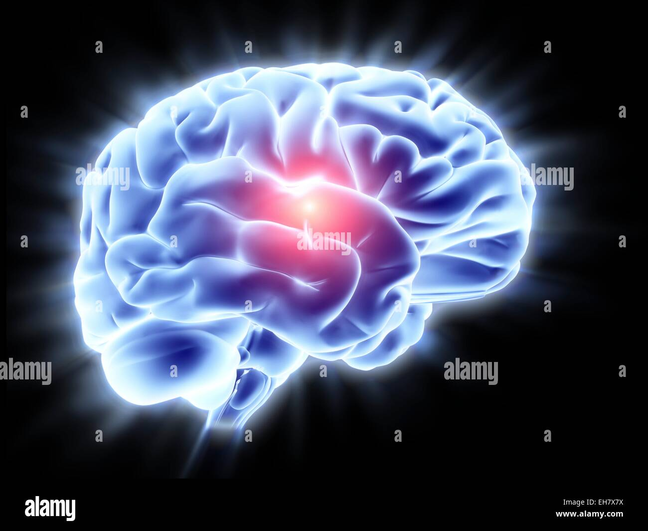 Human brain, artwork - Stock Image