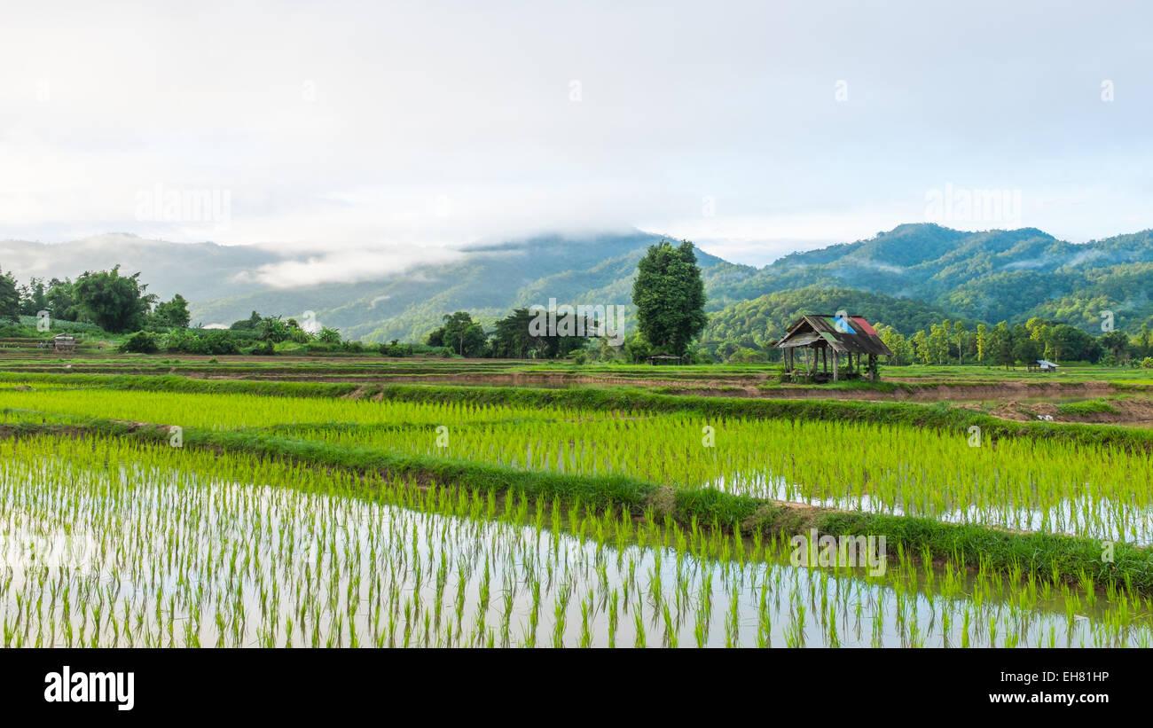 "Poster 19/"" x 13/"" Thailand Rice Field Landscape"