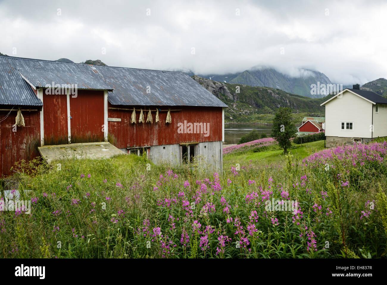 Houses in Tangstad, Vestvagoy commune, Lofoten Islands, Arctic, Norway, Scandinavia, Europe - Stock Image