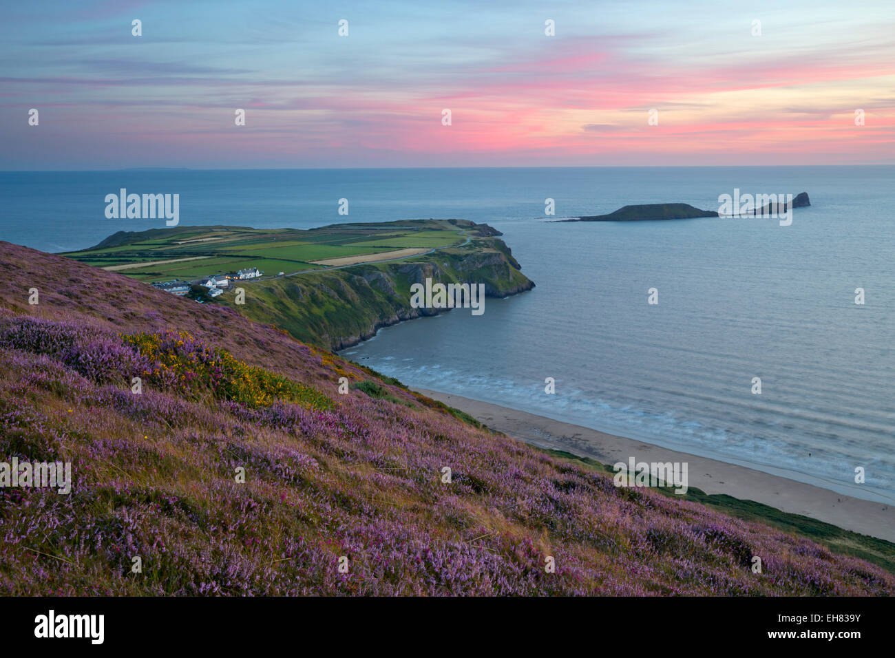 Worms Head and Rhossili Bay with Heather-clad cliffs, Gower Peninsula, Swansea, West Glamorgan, Wales, United Kingdom, - Stock Image