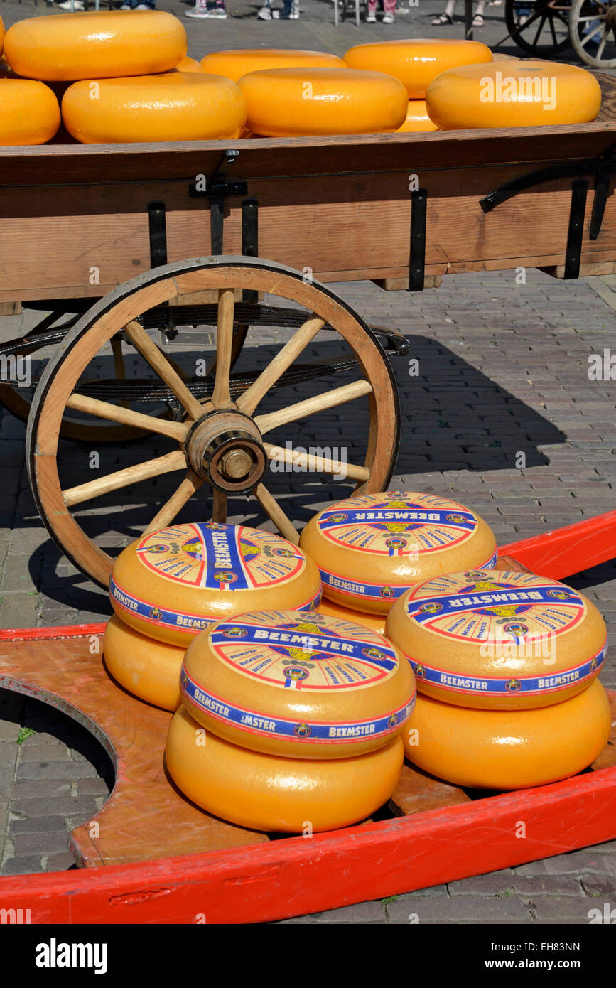 Cheese wheels on a wooden sledge beside a traditional wooden cart, Waagplein Square, Alkmaar, North Holland, Netherlands, - Stock Image