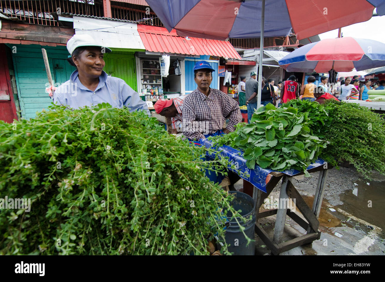 Herb sellers in Stabroek Market, Georgetown, Guyana, South America - Stock Image