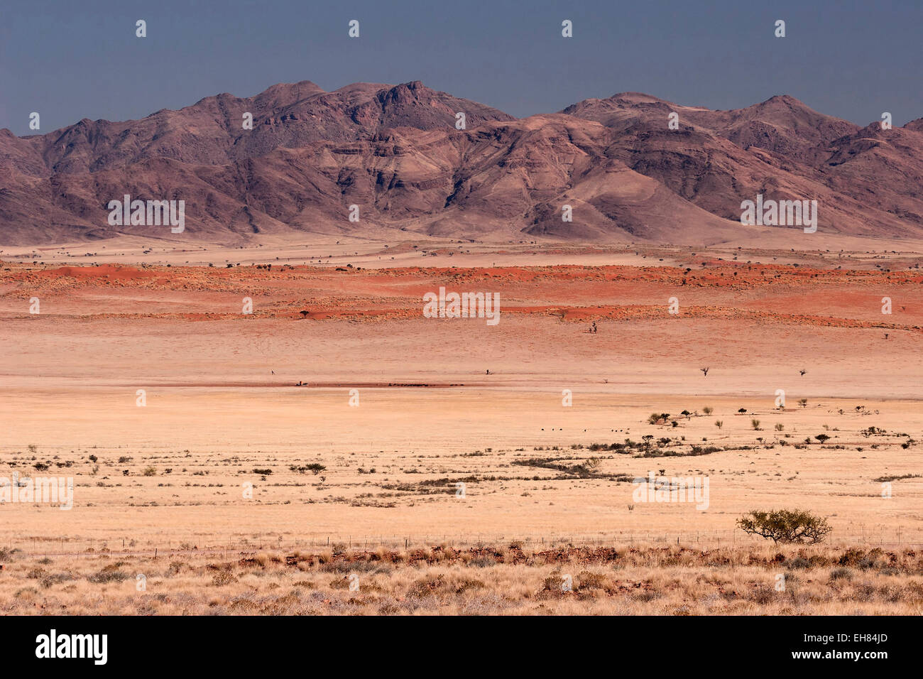 View from pad D707 road of the grassy steppe, sand dunes and the mountains of the Namib Naukluft Park, Namibia - Stock Image