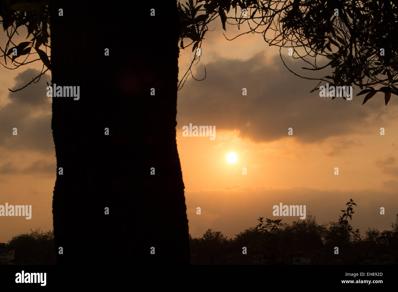 sun rises over a silhouette of trees. - Stock Image