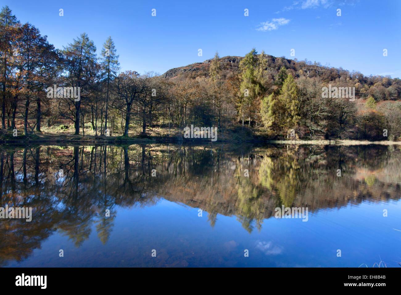 Yew Tree Tarn in autumn, Lake District National Park, Cumbria, England, United Kingdom, Europe - Stock Image