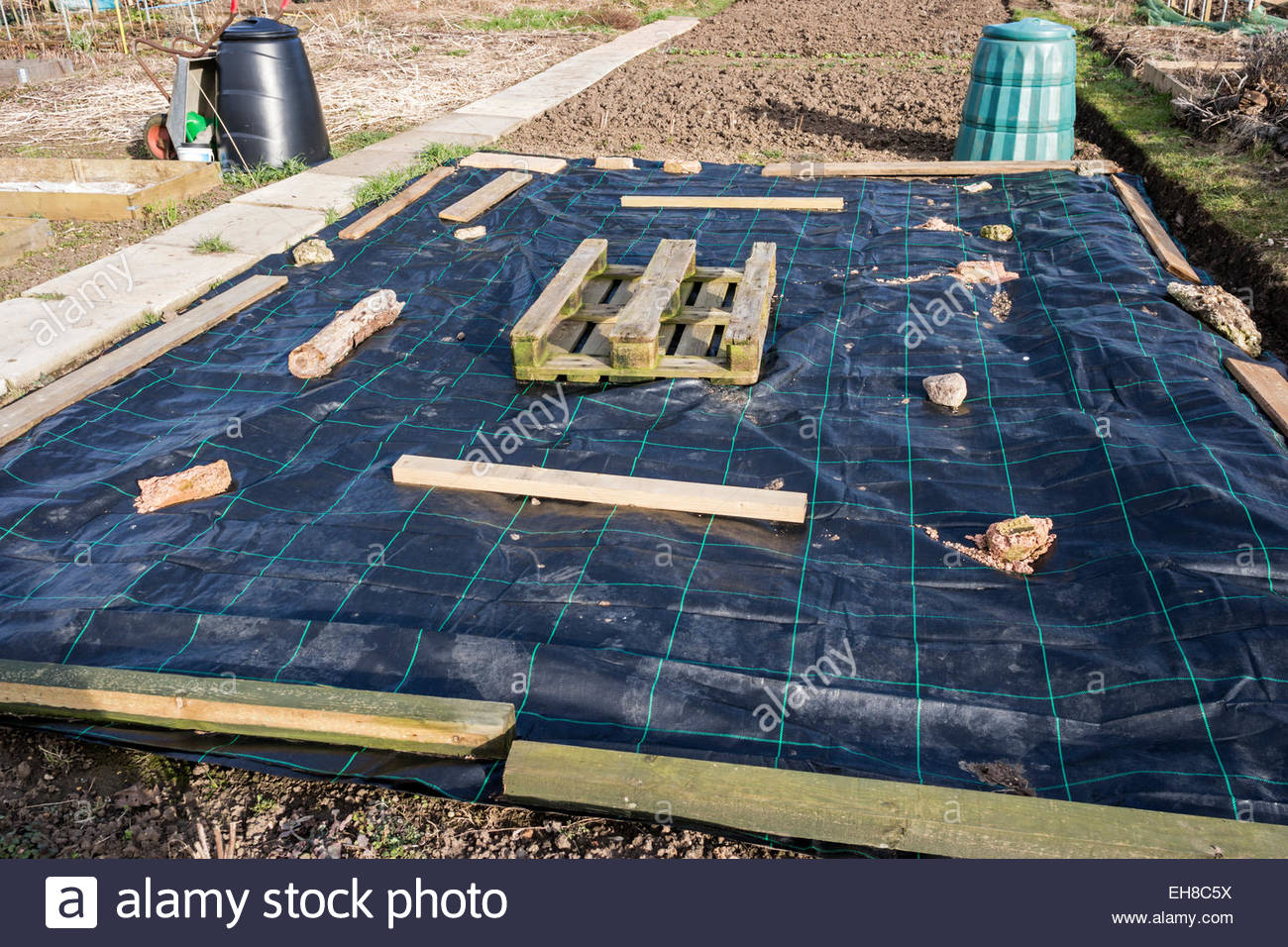 Plastic sheeting for weed control on an allotment - Stock Image