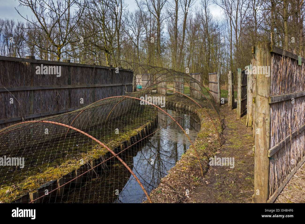 Duck decoy structure used for catching wild ducks showing pipe formed by hoops with netting flanked by screens - Stock Image