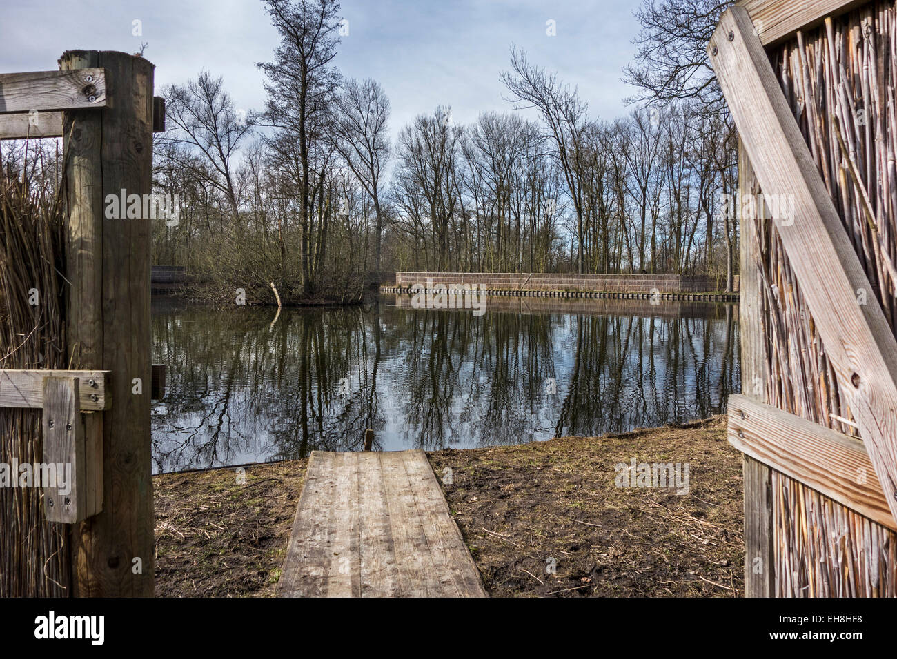 Duck decoy structure used for catching wild ducks showing pond and reed screens - Stock Image