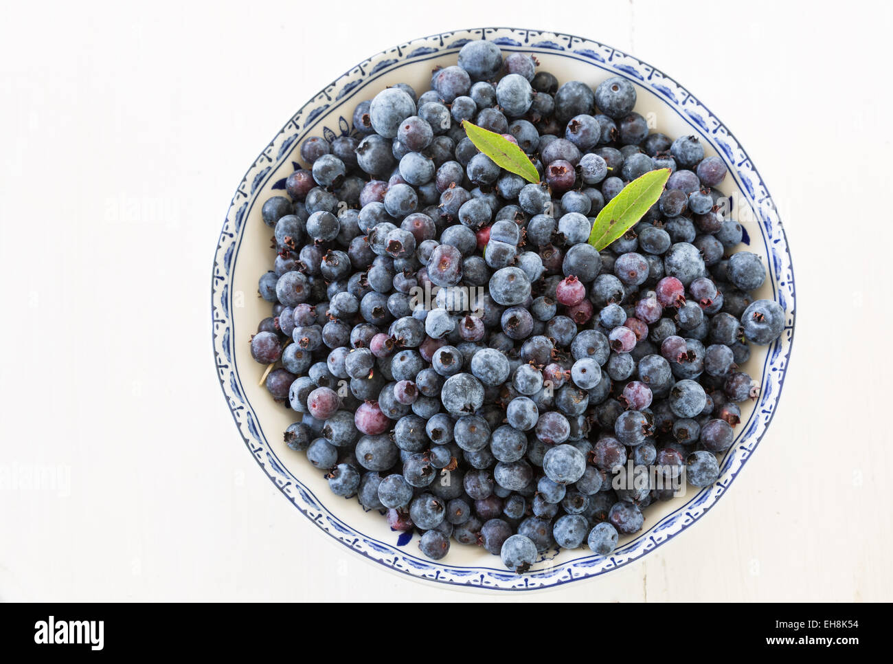 Freshly picked wild low bush blueberries in a china bowl. - Stock Image