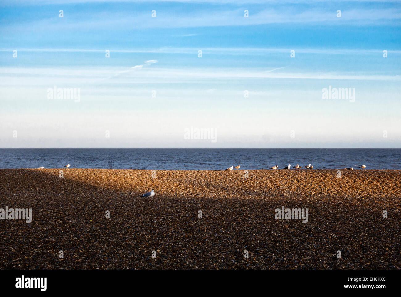 Aldeburgh, Suffolk, UK. Seabirds on the shingle beach at sunset - Stock Image