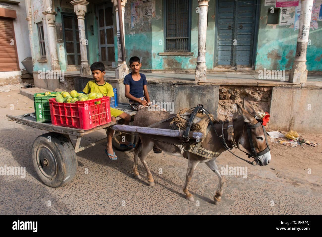 Mandawa, children on donkey cart carrying fruits Stock Photo