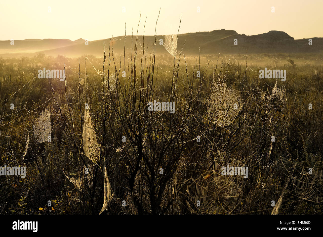 Meadow at dawn with spider webs. - Stock Image