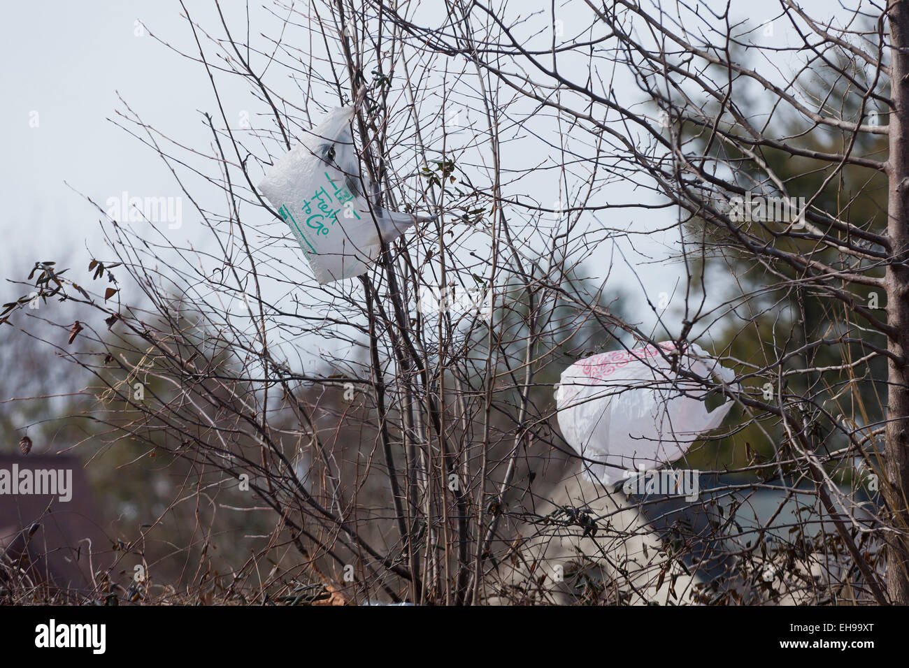Plastic grocery bags caught on bushes - USA - Stock Image