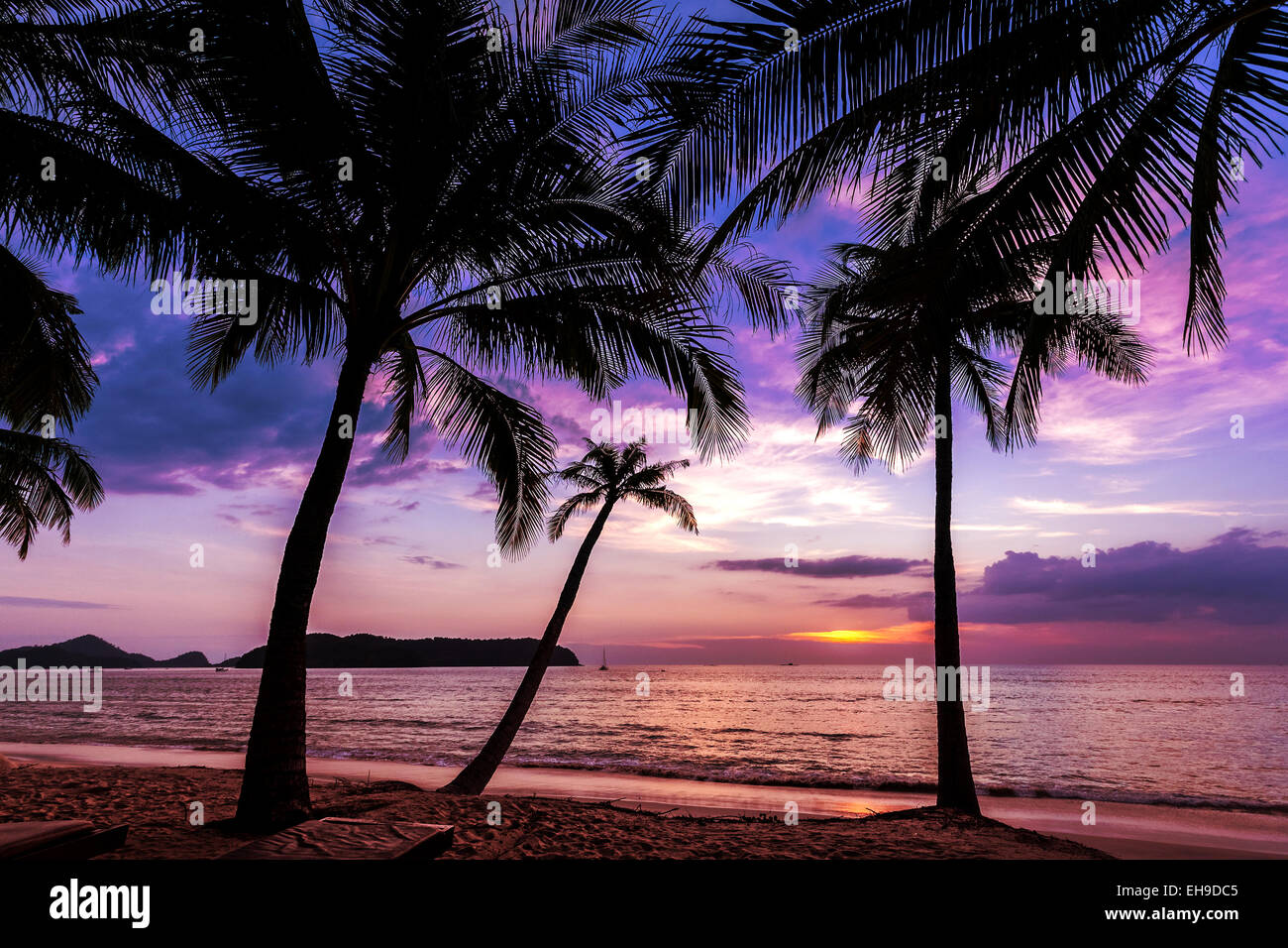 Holiday background made of palm trees silhouettes at sunset. Stock Photo
