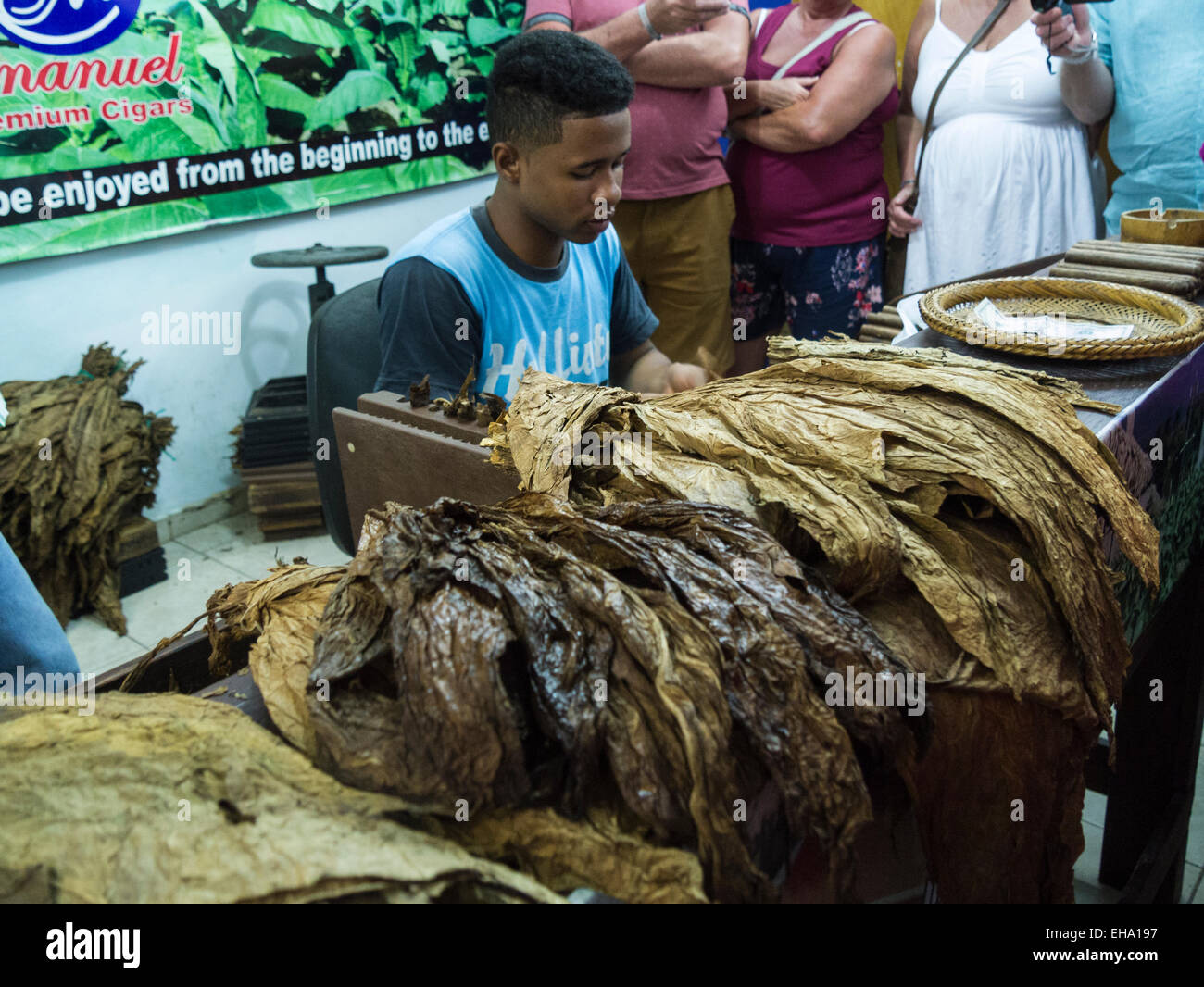 Young Dominican man demonstrating rolling cigars to tourists Dominican Republic cigar producing factory using piles - Stock Image
