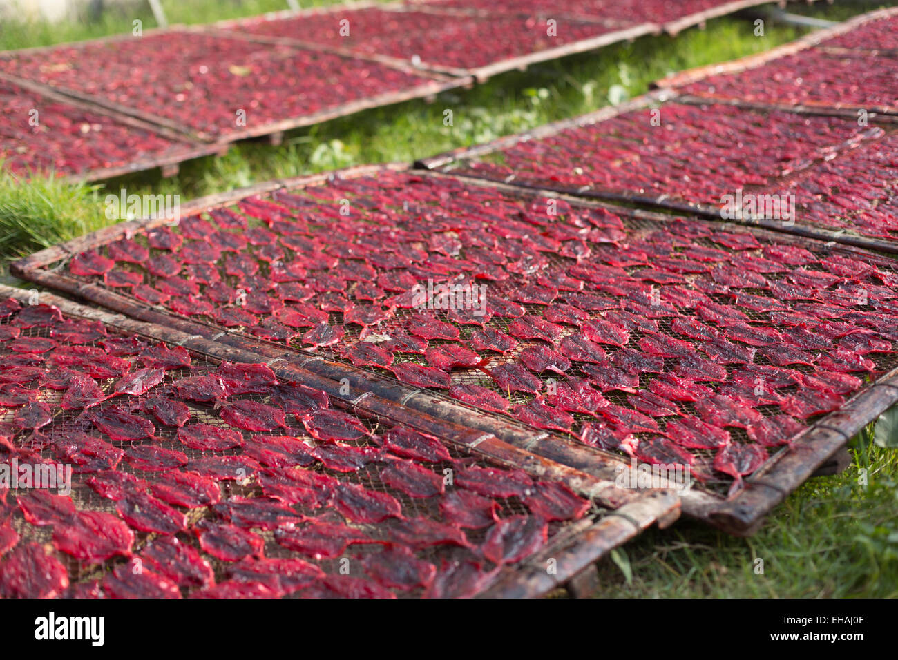 Red colored fish drying on wooden racks placed upon green grass, Tha ...